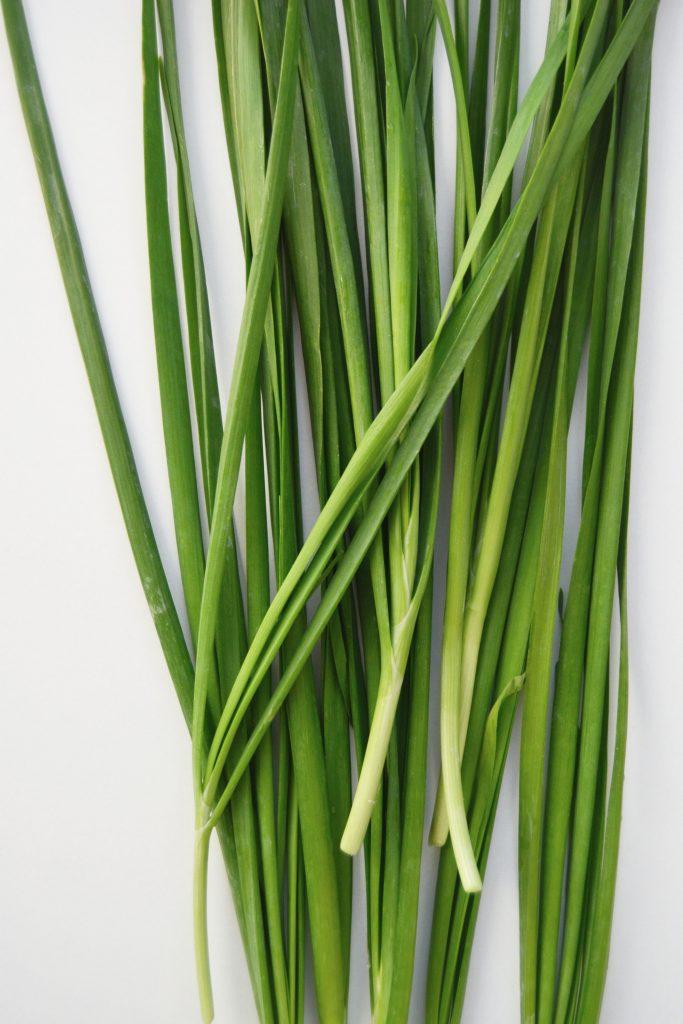 Kinesisk gressløk